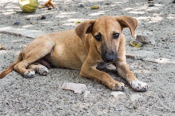 Rescatar a un perro callejero