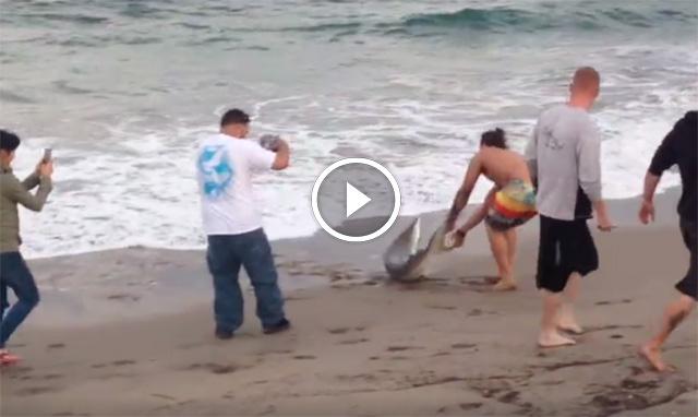 Sacaron a un tiburón del agua