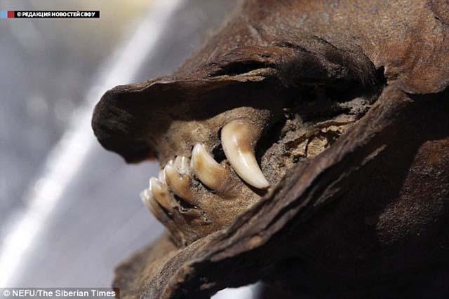 Encunetran perro de 12 400 años de antiguedad