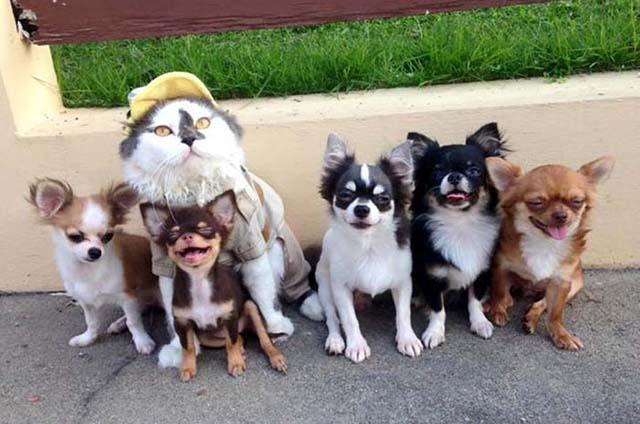 Este gato es lider de un grupo de perros
