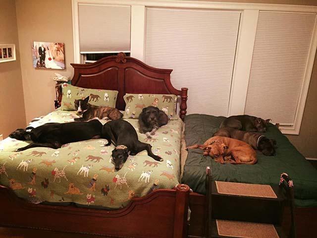 Familia necesita otra cama para más perros