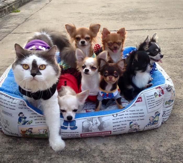 Gato es líder de un grupo de perros