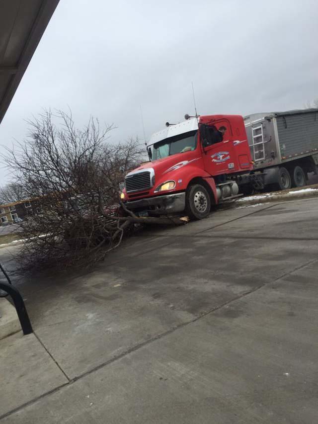 Perro condujo un camión y chocó contra un árbol