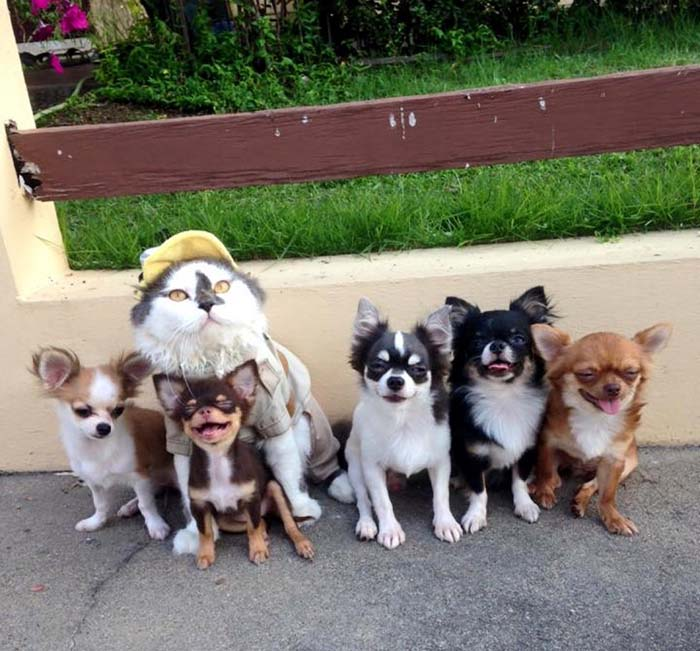 Richie con sus perritos