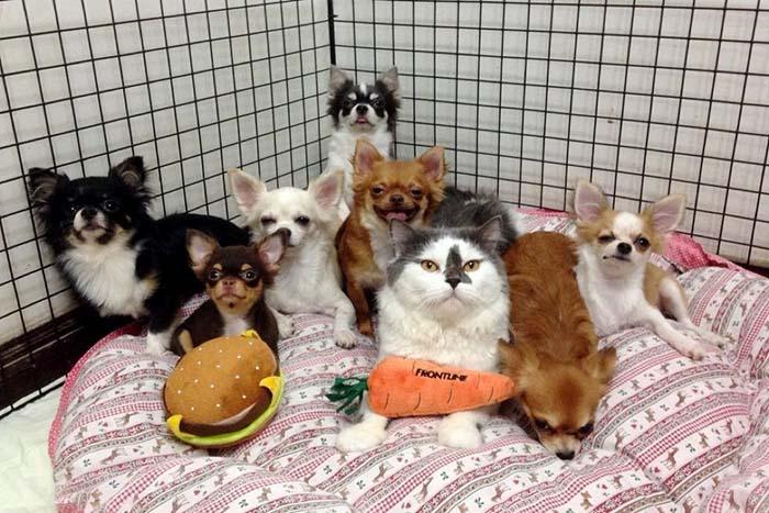 Un gato y sus perros