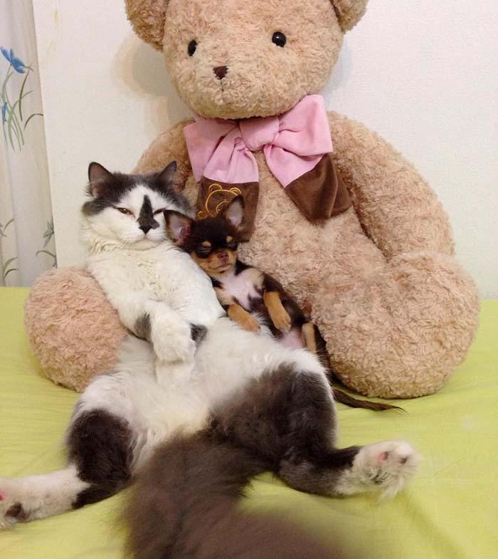 Un gato y un perrito