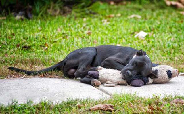 perro abandonado encuentra consuelo en un oso de peluche