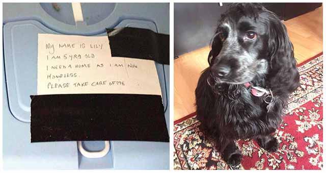 Una perra rescata a una gata abandonada en un portador de animales