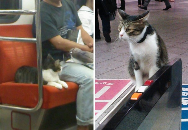 Gato pasea en tren