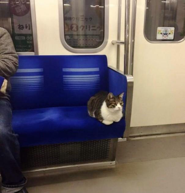 Gato viaja en metro en Tokio desde el 2013