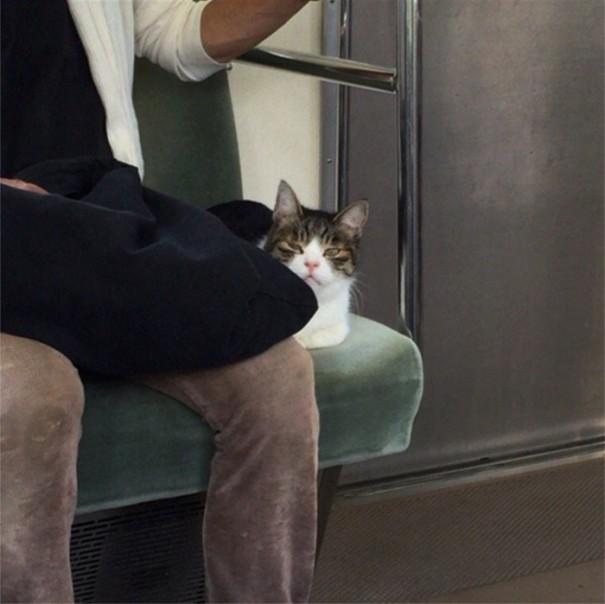 Gato viaja en metro en Tokio