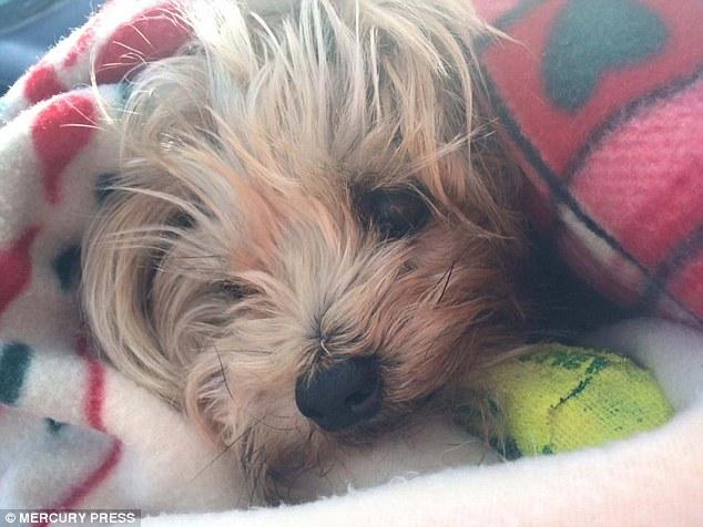 Maisie durmiendo