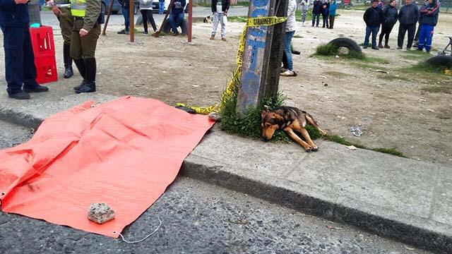 Perro no se aleja de su humano que falleció en un accidente