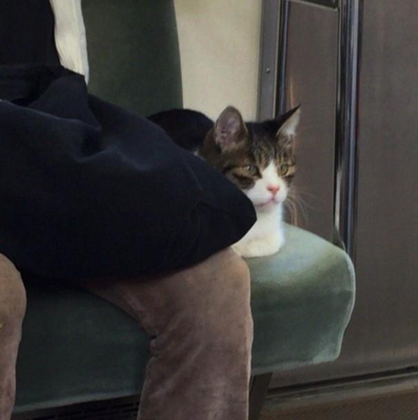 gato pasea en metro en Tokio