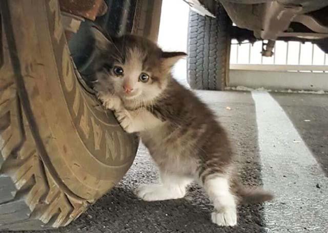 Encontro una gatita asustada debajo de un camion