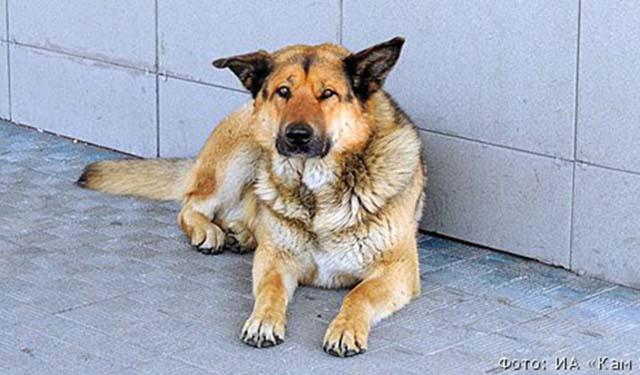 Perro ha esperado a su humano en el aeropuerto una semana