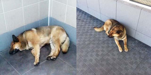 Perro lleva esperando una semana a su humano