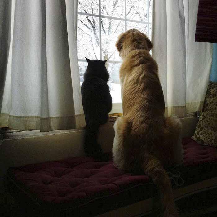 Hermosa amistad de un perro y un gato