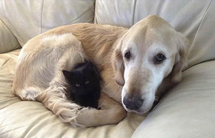 Perro perdio a su amigo felino con cancer pero ahora es feliz de nuevo (2)