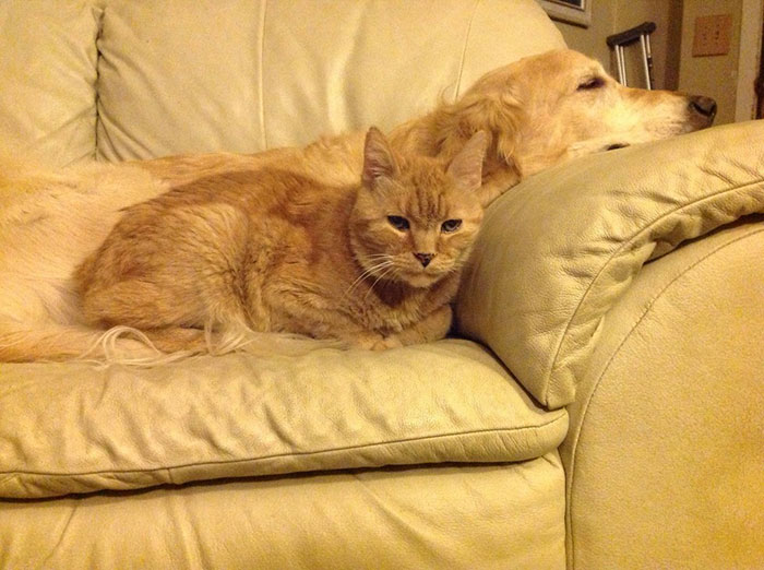 forsberg y su hermano felino