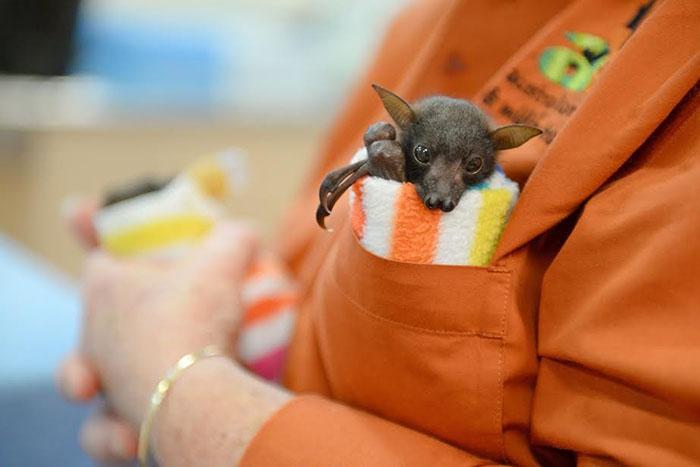 Bebé murciélago alimentando