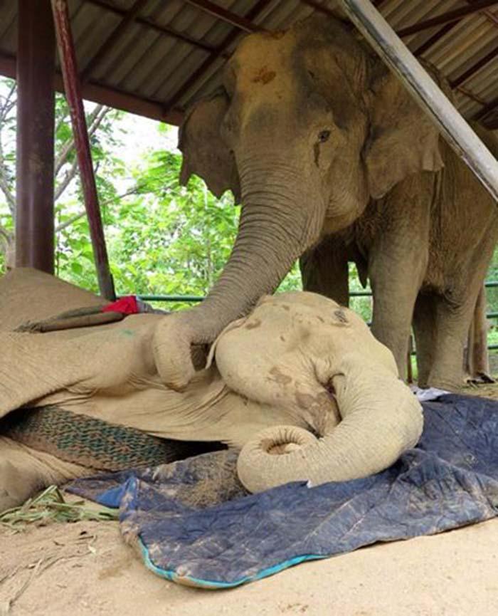 Boon Thong tratando de despertar a Sao Noi