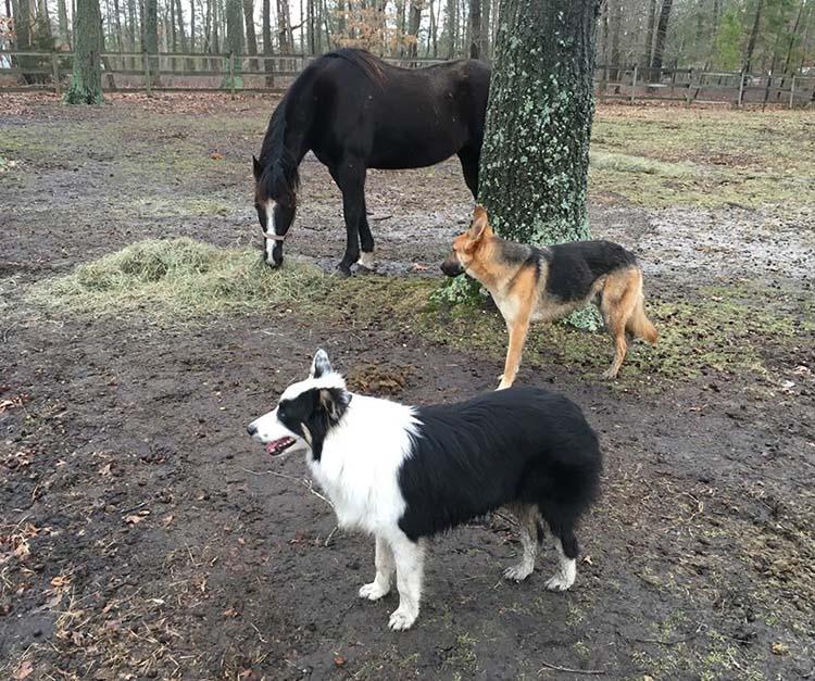 Chuck y los demás animales de la granja