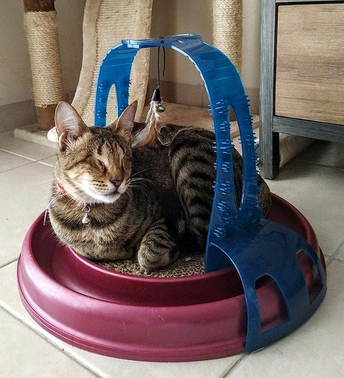 Gato ciego adoptado