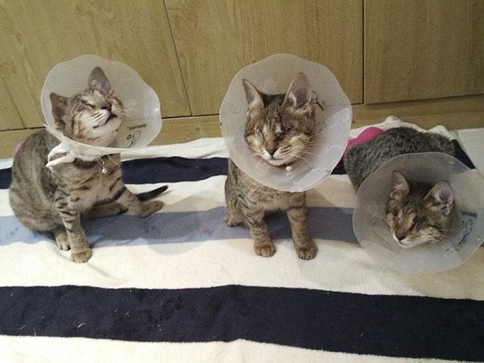 Gatos ciegos por gripe que no cuidaron
