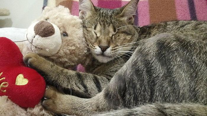 Gatos ciegos rescatados