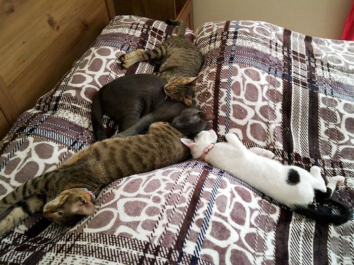 Gatos ciegos y gatos adoptivos