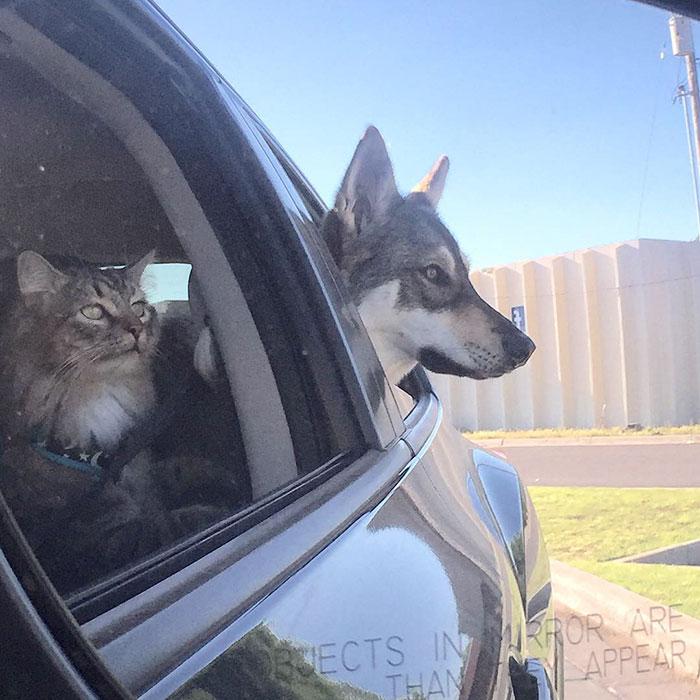 Hermosa amistad de una perra y una gata