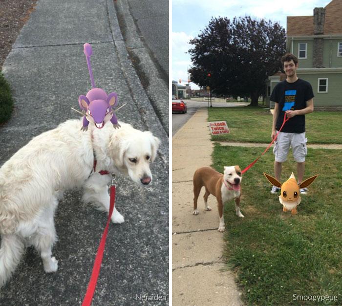 Jugadores Pokemon Go pasean perros