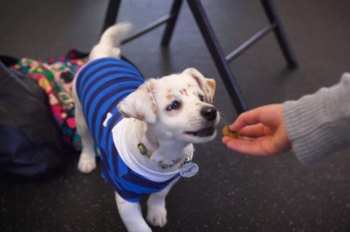 Niña sorda enseña a perro sordo lenguaje de señas