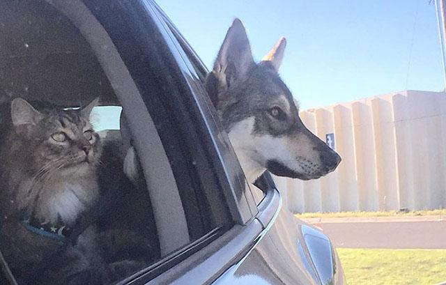 Perra eligió a su propio gato de un refugio y lo llevó a casa