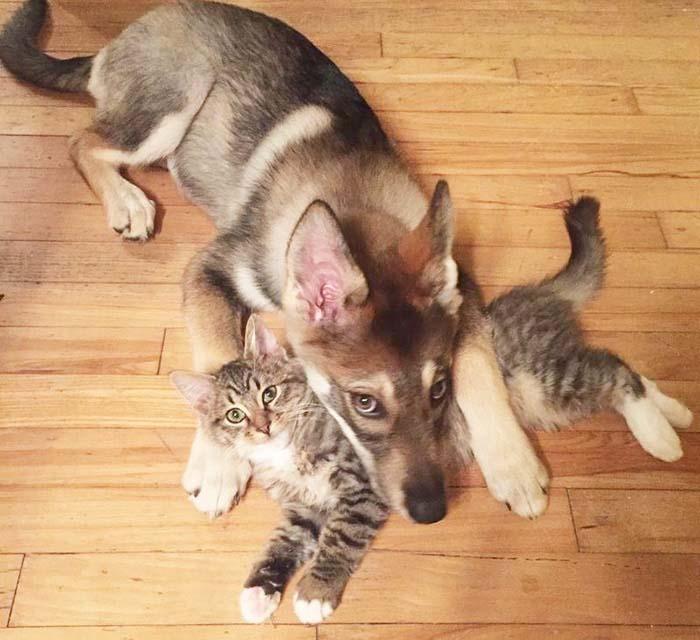 Perra y gata son amigas