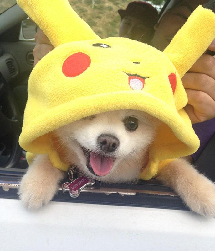Perro Pokemon