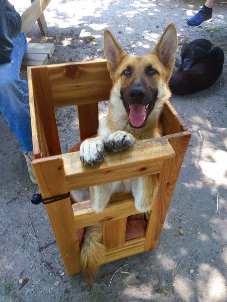 Perro con megaesófago