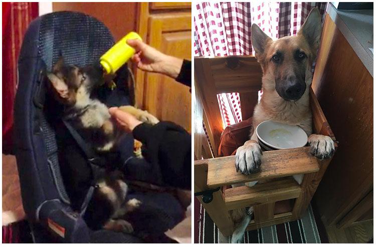 Perro nació con extraña condición