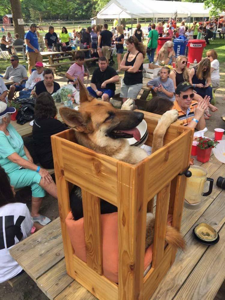 Perro usa silla especial porque nació con megaesófago
