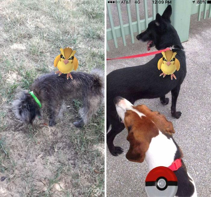 Pokemon y perro