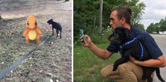 Refugio de animales pidio a voluntarios jugadores Pokemon Go pasear a sus perros