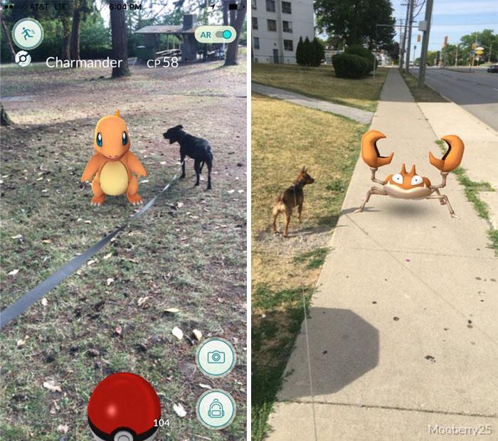 Refugio pide a jugadores de Pokemon Go pasear perros