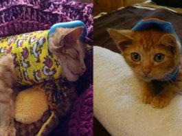 Este adorable gato sufrió un grave accidente y se recupera gracias a un pequeño molde corporal