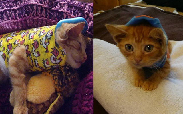 Este adorable gato sufrió un grave accidente y se recupera rápidamente gracias a un pequeño molde de yeso