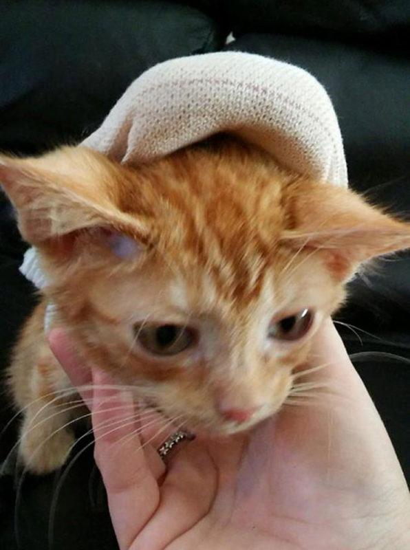 Gato Davey