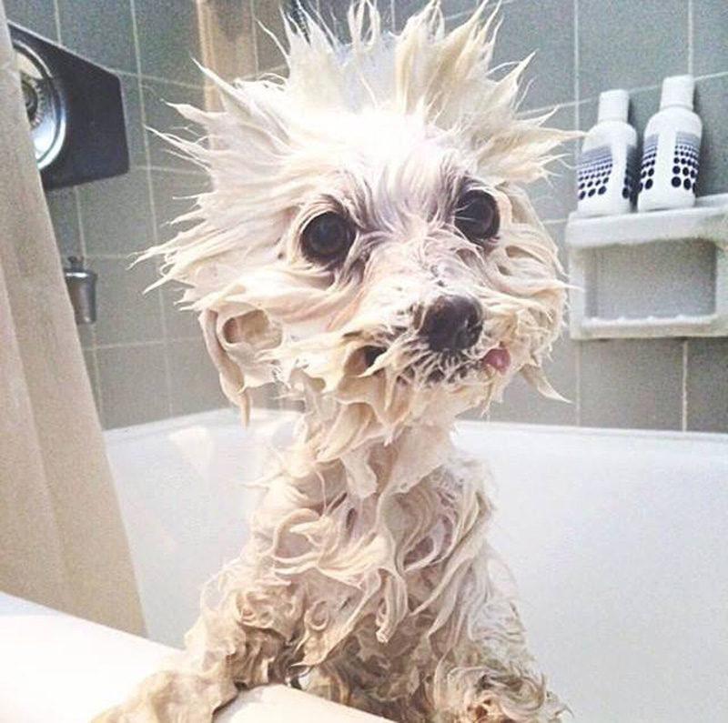 tusk toma una ducha