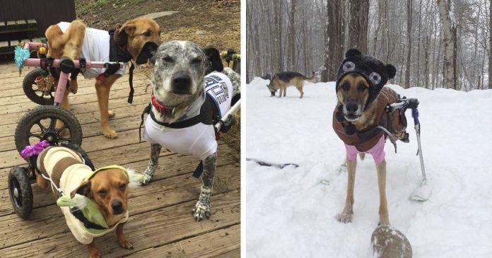 Mujer adopta perros con necesidades especiales y les da un hogar