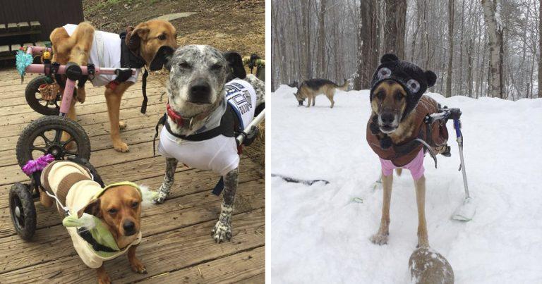 Mujer adopta a 6 perros con necesidades especiales y les cambia la vida