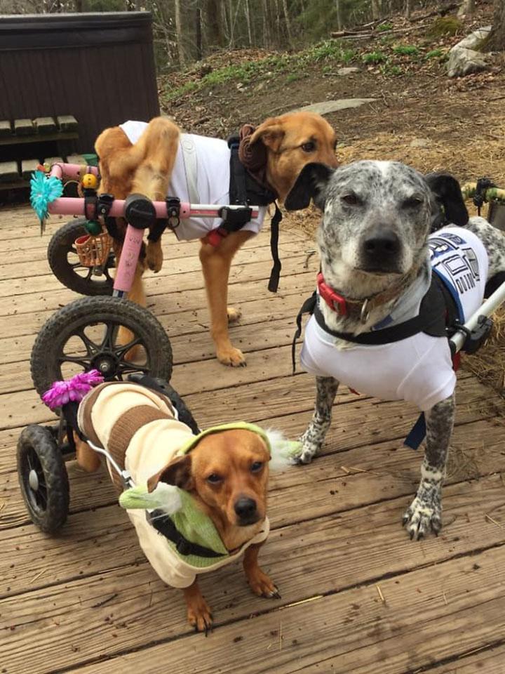 Tracey Fowler adopta perros especiales y les llama the fowler herd
